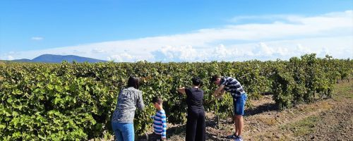 Vršac Wine Route