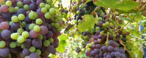 Fruška Gora National Park - Serbia Wine & Fruit Tour